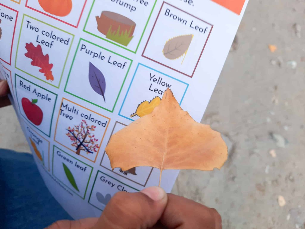 child holding a fall leaf and a fall scavenger hunt printable